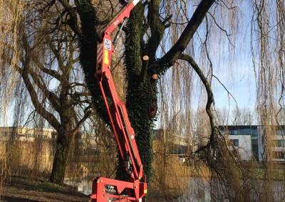 Snoeien van bomen met hoogwerker