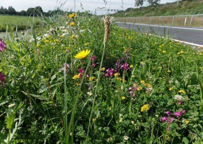 Ecologisch beheer van bermen en watergangen in Bodegraven-Reeuwijk